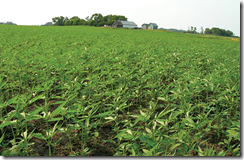 A Kentucky-based hemp seed grower is the first company to
